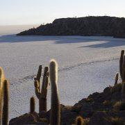 ISLA INCAHUSI-TOUR SALAR DE UYUNI
