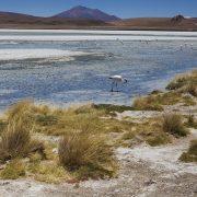 laguna blanca-TOUR SALAR DE UYUNI